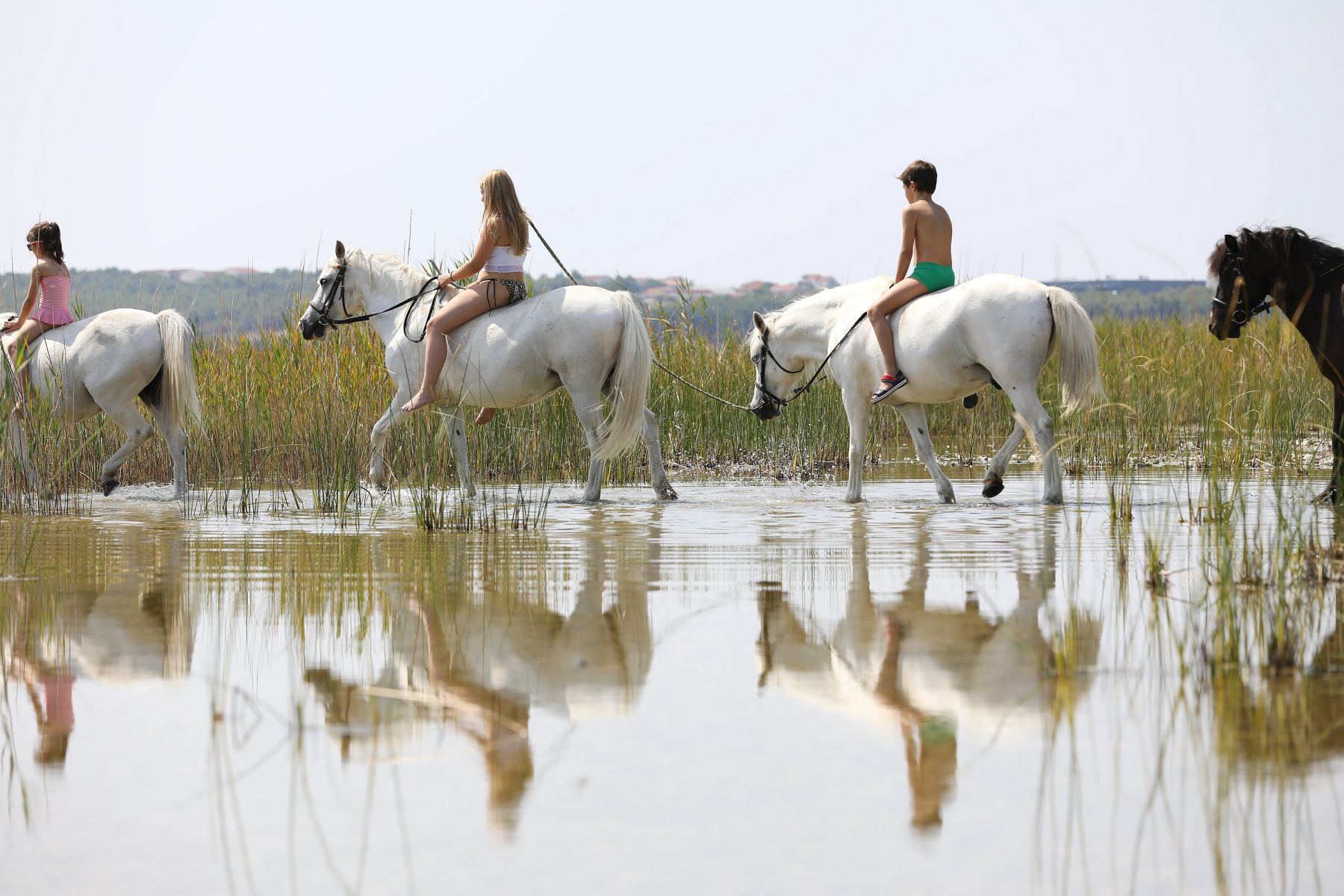Lake Vrana, Croatia, Horse riding